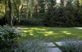 backyard-landscape-photo (67)